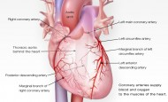 Taşikardi Çeşitleri nelerdir? – What isTachycardia Types?