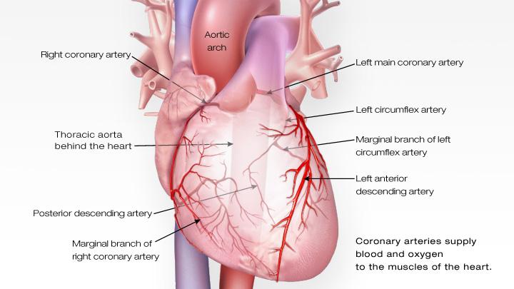 1-kalp-krizi-nasil-gerceklesir-1