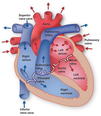 heart-working-hamilyon.com