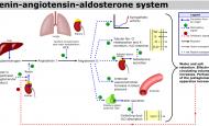 anjiyotensin dönüştürücü enzim inhibitörü ilaçları nelerdir?