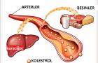 Kolestrol düşürücü kalp ilaçları nelerdir? what is Cholesterol-lowering medications for heart?