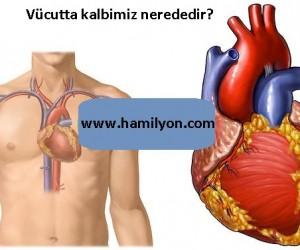 İnsan vücudunda kalp nerededir? Kalp nasıl çalışır?