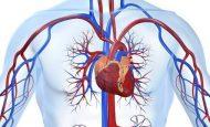 En Sık Rastlanan Kalp Damar Hastalıkları